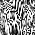 PP17-zebra_mikki
