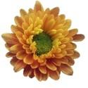 dzava_cozy_flower1