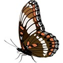 butterfly brown