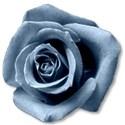 roselightblue