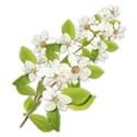 floral branch copy