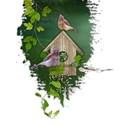 cluster bird house vines