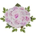 bunch roses pink lilac
