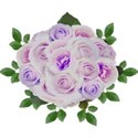 bunch lilac roses