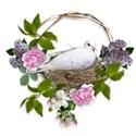 backyard sanctuary cluster dove nest