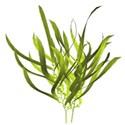 snackapckgu_GF_seaweed1