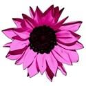 flowerpink3