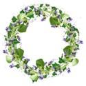 violet ivy wreath