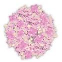 hydrangea pink full