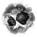 rose boquet 2