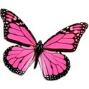 pink_butterfly