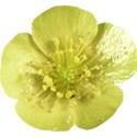 OneofaKindDS_Super-Genius_Flower