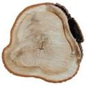 treestump 3