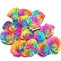 rainbow rose bunch_edited-1