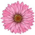 FM-Flowery Summer Element (2)