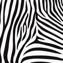 AYW-WildAtHeart-ZebraPaper2