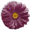 flower2-ar-mikkilivanos