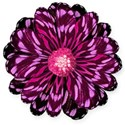 purple flower2