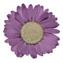 BD_Purple_05