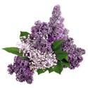BD_Purple_03
