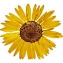 DZ_YIP_Nov_flower1