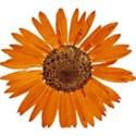 DZ_YIP_Nov_flower2