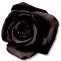 rosebrown1