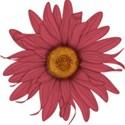 B flower 4