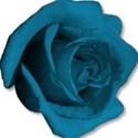 roseblue2
