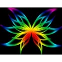 rainbow_butterfly_wallpaper_4-t2