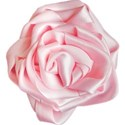 Pink Ribbon Rose