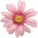 Pink Flower 02