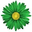 flower 2 b