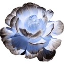 kitd_bluemarine_realflower1