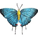 childrensbooks_butterfly2