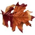 stierney_bountiful_leaf1