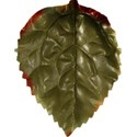 stierney_bountiful_leaf3