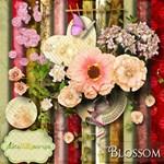Blossom +Alpha