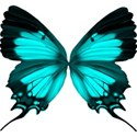 turquoise butterfly2