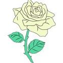 creamrose
