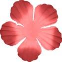 kitc_mexico_flower6