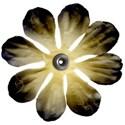 LHanks_BlueMoon_flower2
