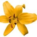 lisaminor_tpiyn_baker_flower_b