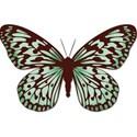 Pamperedprincess_sticktoyourroots_butterfly copy