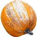 chey0kota_Frost Pumpkin Mini_Ele (4)
