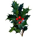 cwJOY-ClassicChristmas-holly1