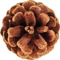 cwJOY-TraditionalChristmas-pinecone1