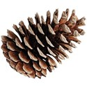 cwJOY-TraditionalChristmas-pinecone2