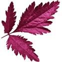 aw_bandit_leaves magenta