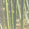bamboo layered background 6